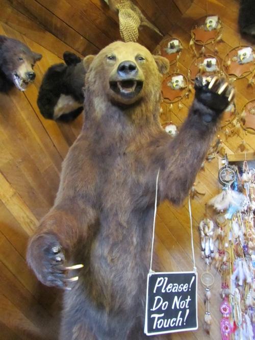 Bear claws claw.